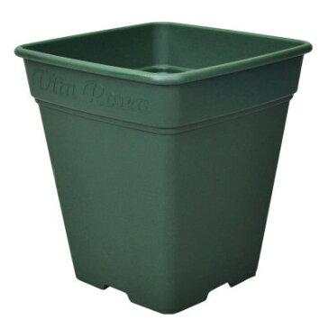 ロゼアスクエア 330型 グリーン 330x330x360mm【緑色 角鉢 角型 四角 プラ鉢 プラポット プラスチック鉢 スリット アップルウェアー/4905980312142】