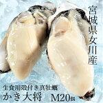 殻付き牡蠣M(5個)