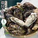 開店記念20%OFFクーポン配布中! 【殻付き牡蠣Lサイズ5個】 活生カキ 新鮮生...