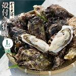 殻付き牡蠣L(5個)