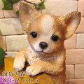 【30代女性】犬好きの妻にプチギフト!犬モチーフのかわいいアイテムのおすすめは?