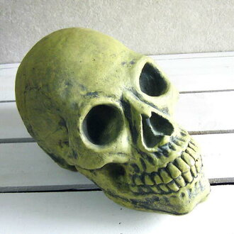 Scull | Skeleton | Interesting | Unique miscellaneous goods | The skeleton which shines