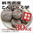 【2016年産群馬県産】★生芋こんにゃく手作り用こんにゃくいも★こんにゃく芋[30kg