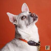 首輪カラーロープ&レザー犬用FoundMyAnimalファウンドマイアニマル/レスキュー・オレンジ/海外直輸入ブランド/小型犬中型犬大型犬