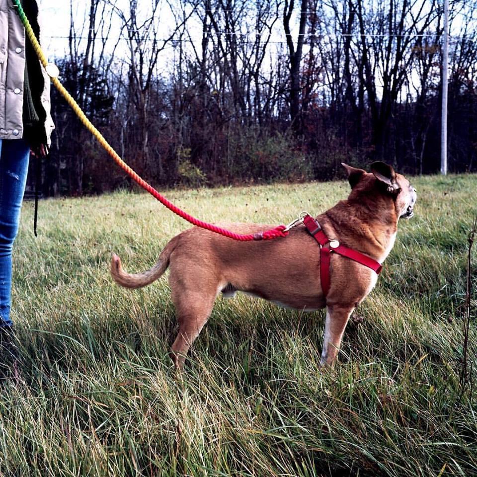 アジャスタブル リード リーシュ 犬用 Found My Animal ファウンド マイ アニマル / プリズマティック / 海外直輸入 ブランド おしゃれ かわいい しつけ 長い / 小型犬 中型犬 大型犬