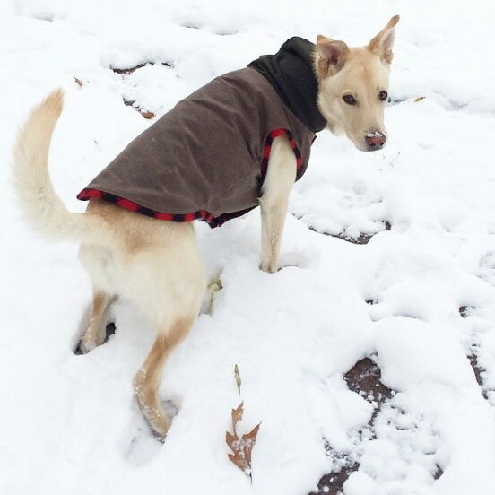 / ドッグ ウェア リバーシブル ベスト 犬用 Found My Animal ファウンド マイ アニマル / ウール&キャンバス レッド・バッファロー・プラッド&ブラウン サイズ:S / 海外直輸入 おしゃれ / 小型犬 中型犬 大型犬