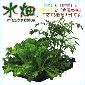 土を使わないからお家で簡単水耕栽培 野菜栽培 家庭菜園をしてみたい方お薦め!水畑 【水栽培 ...