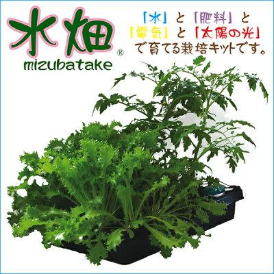 土を使わないからお家で簡単水耕栽培 家庭菜園をしてみたい方。お野菜の高いこの季節に、いかが...