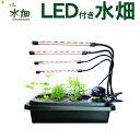 水耕栽培キット LED付き水畑 LEDタイプ 選択 白のLE