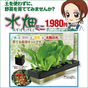 土を使わないからお家で簡単水耕栽培 野菜栽培 家庭菜園をしてみたい方!ミニサイズが出来まし...