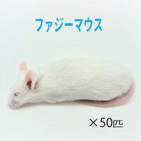 冷凍ピンクマウスL(50匹)約4.0cm/匹冷凍マウスピンクマウス国産冷凍餌エサ猛禽類爬虫類両生類大型魚の肉食ペット用クール便発送