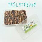 冷凍イナゴLサイズ1パック(約200g/170匹入り)冷凍イナゴ蝗冷凍ペット用品両生類大型中型魚小動物用富城物産3パック