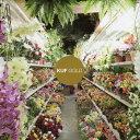 ゴールド/CD/OTLCD-2251