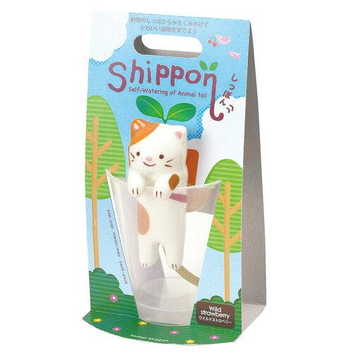 栽培キット しっぽん ネコ ワイルドストロベリーの写真