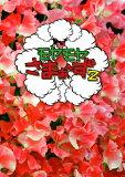 モヤモヤさまぁ~ず2 DVD-BOX(VOL.28、VOL.29)/DVD/ANSB-56709
