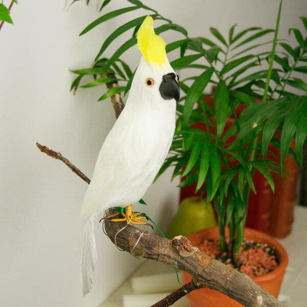 """アーティフィシャル・バード """"Parrot"""" - S/Aの写真"""