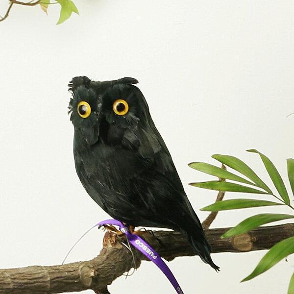 """アーティフィシャル・バード """"Black Owl"""" - Sの写真"""