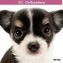 2017年度版 THE DOG カレンダー チワワ