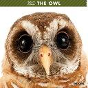 アーリスト 2017年 THE OWL カレンダー 1個
