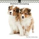 2017年度版 THE DOG ミニカレンダー シェットランド・シープドッグ