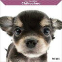 アーリスト THE DOG カレンダー チワワ 1個