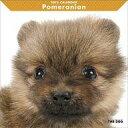 アーリスト THE DOG カレンダー ポメラニアン 1個