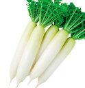 OKNEW(ダイコン)春まき耐病総太り二号(タキイ交配)4ml春まき野菜種
