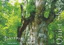音のソノリティ ヒーリング・エディション QUIETSLEEP/DVD/VPBF-12648画像