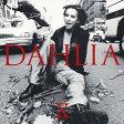DAHLIA/CD/AMCM-4271