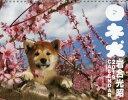 日本犬カレンダー 2019 /辰巳出版 辰巳出版 9784777820948